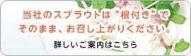 """""""根つき""""がポイント!"""